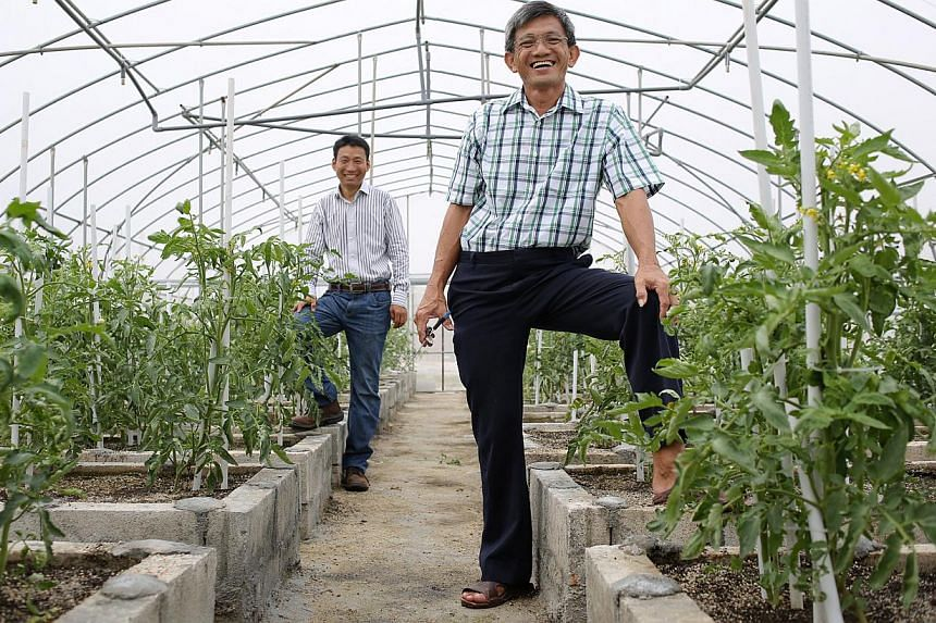 Mr Ang (right) was sold the organic dream by his partner, Mr Zhang Aimin (left), a former Chinese national who became a Singaporean 15 years ago. Their  5ha farm in Lim Chu Kang now produces about 100kg of vegetables a day, distributed to about 10 or