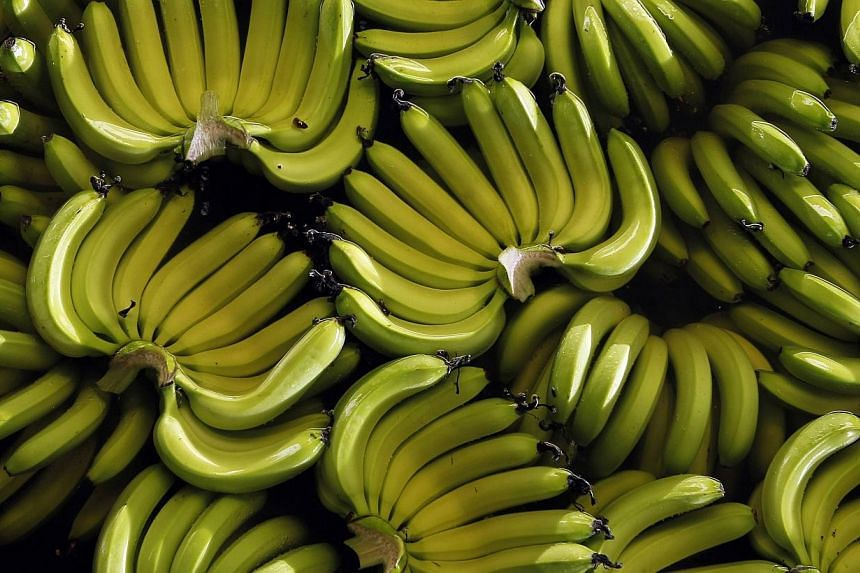 "Bananas are seen on a plantation outside Guayaquil, Ecuador, in this file photo taken February 23, 2012. The United Nations warned on Monday of the potential ""massive destruction"" of the world's banana crop if a disease affecting the most popula"