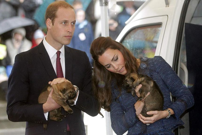 Catherine, the Duchess of Cambridge, holds a puppy with her husband, Britain's Prince William, as they tour the Royal New Zealand Police College in Wellington on April 16, 2014. -- PHOTO: REUTERS