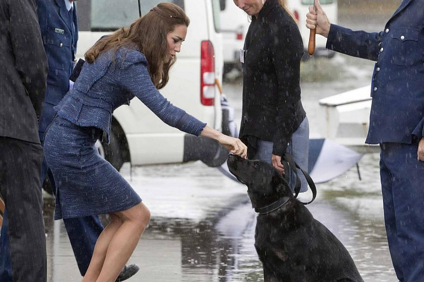 Catherine, the Duchess of Cambridge, pats a police dog as she tours with her husband, Britain's Prince William, the Royal New Zealand Police College in Wellington on April 16, 2014. -- PHOTO: REUTERS