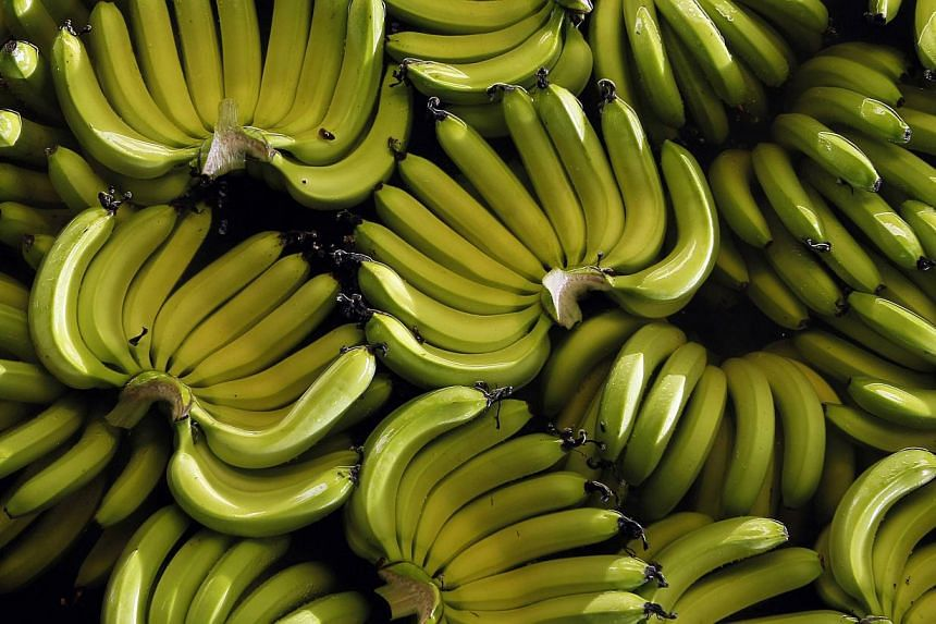 Singapore's fresh banana supply is stable, the Agri-Food and Veterinary Authority (AVA) has said in response to global concerns that a lethal banana-plant disease has spread from Asia to the Middle East and Africa. -- PHOTO: REUTERS