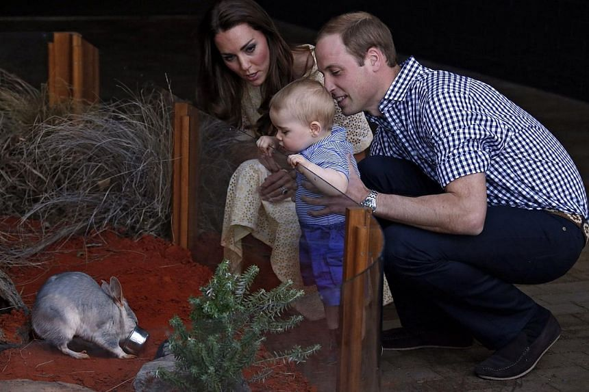 Catherine, the Duchess of Cambridge (Left), and her husband Britain's Prince William (Right), watch as their son Prince George looks at an Australian animal called a bilby, which was named after the young prince, during a visit to Sydney's Taronga Zo