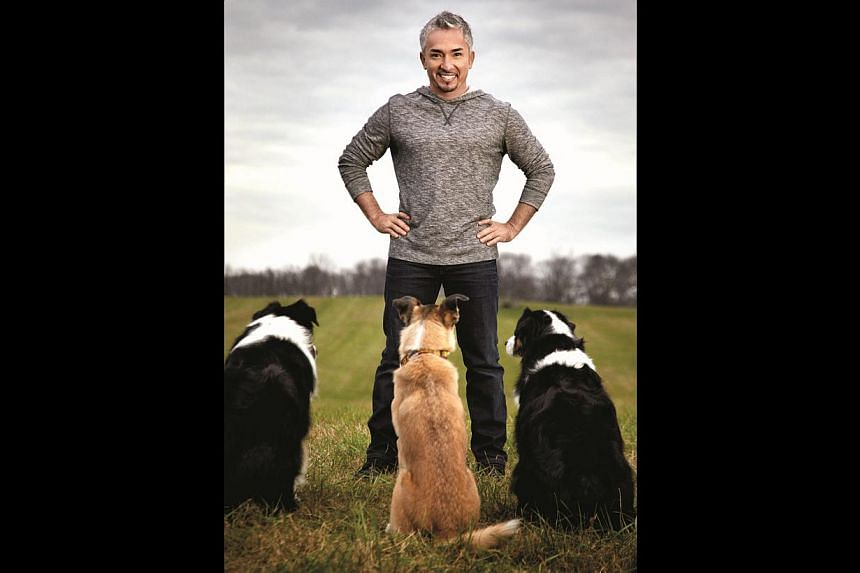 Cesar Millan (above) on life after his divorce and suicide attempt. --PHOTO: NATIONAL GEOGRAPHIC CHANNEL