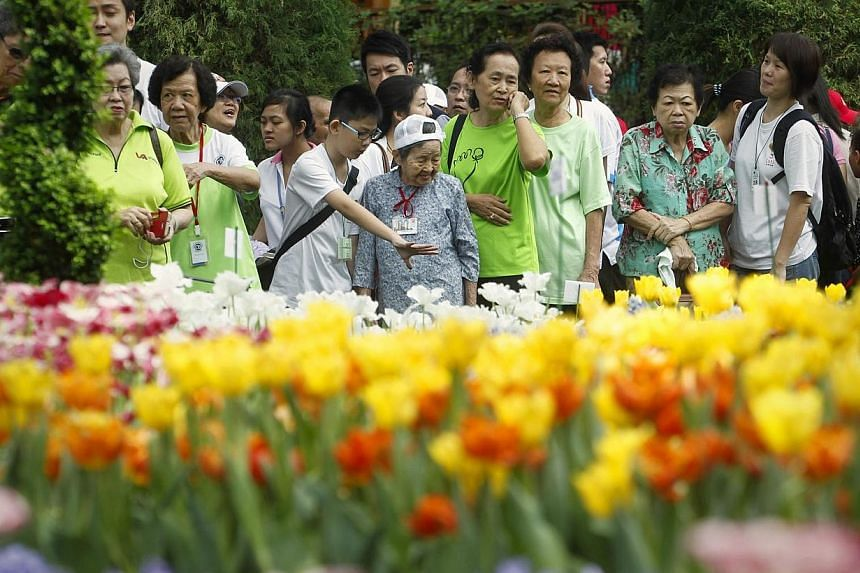 Madam Lim Shiock Shuan (with white cap), 96, from Kheng Chiu Loke Tin Kee Home, admiring tulips with 10-year-old student volunteer Bradley Tang at the Flower Dome in Gardens by the Bay on April 27, 2014. About 700 volunteers from the Chinese Developm
