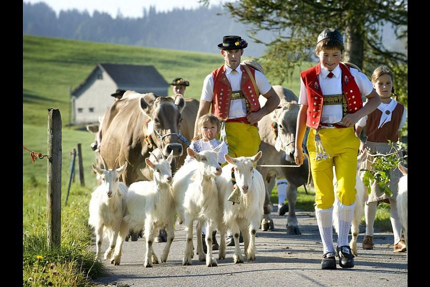 In autumn, the farmers lead their cows down from the top of the mountain to the valleys to keep the animals out of the freezing winter in an annual procession (above) known as the alpine cattle's descent. -- PHOTO: SWITZERLAND TOURISM