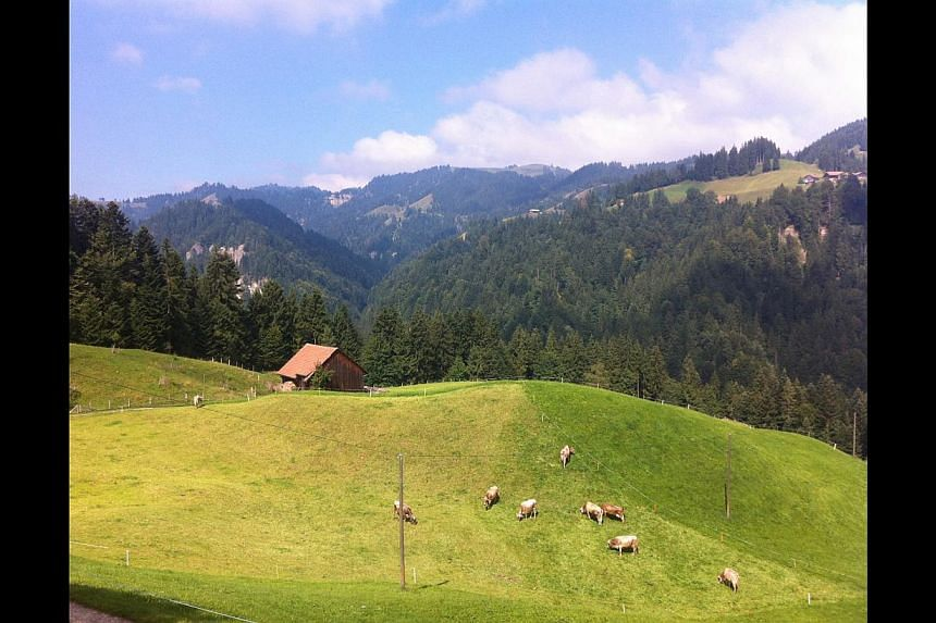 Rolling hills in the Appenzell region (above) are dotted with cows. -- PHOTO: YIP WAI YEE