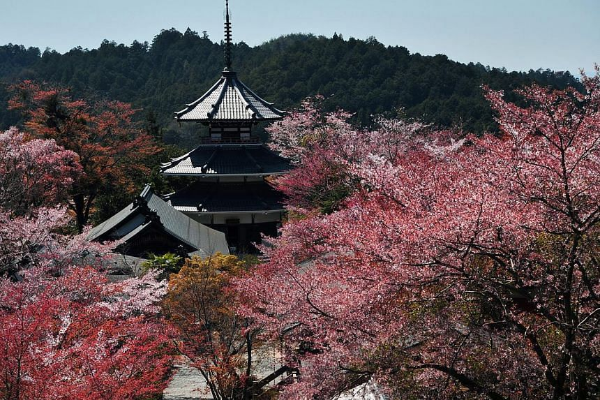 The Kinpusenji pagoda is the leading temple in Yoshino. In 2004, Yoshino, together with Mount Koya and Kumano, was designated a cultural Unesco World Heritage Site named the Sacred Sites and Pilgrimage Routes in the Kii Mountain Range. -- ST PHOTO: D
