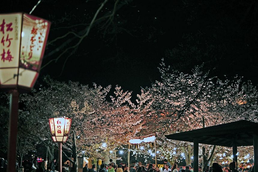 Popular places for hanami parties, such as the Marayama-Koen park in Kyoto, are illuminated at night. It is the oldest park in Kyoto and is packed with people and rows of beverage and food stalls to cater for the late night drinking and festivity. --