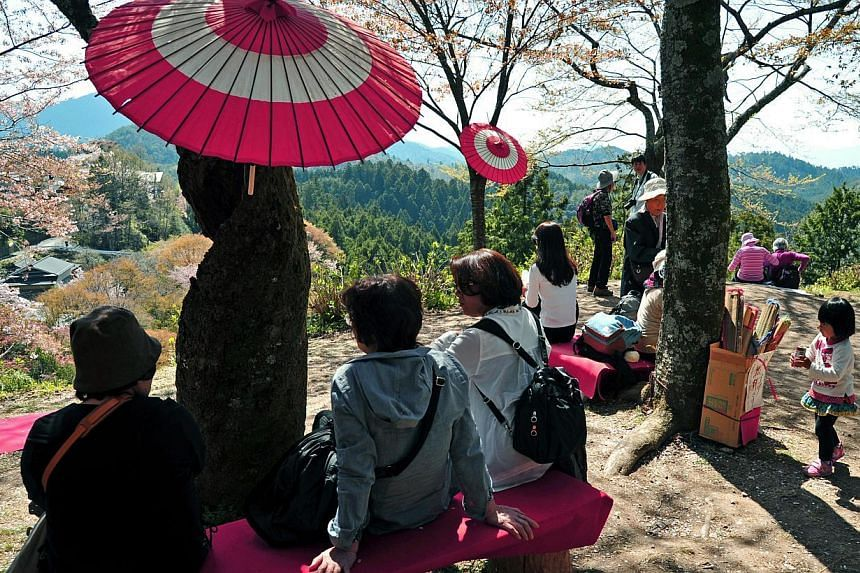 Picnickers having their lunch break at Mount Yoshino. Hanami traditionally involves a picnic party under the blooming trees. Such traditions have been enjoyed in Japan for many centuries and today, are held in public and private gardens and parks. --