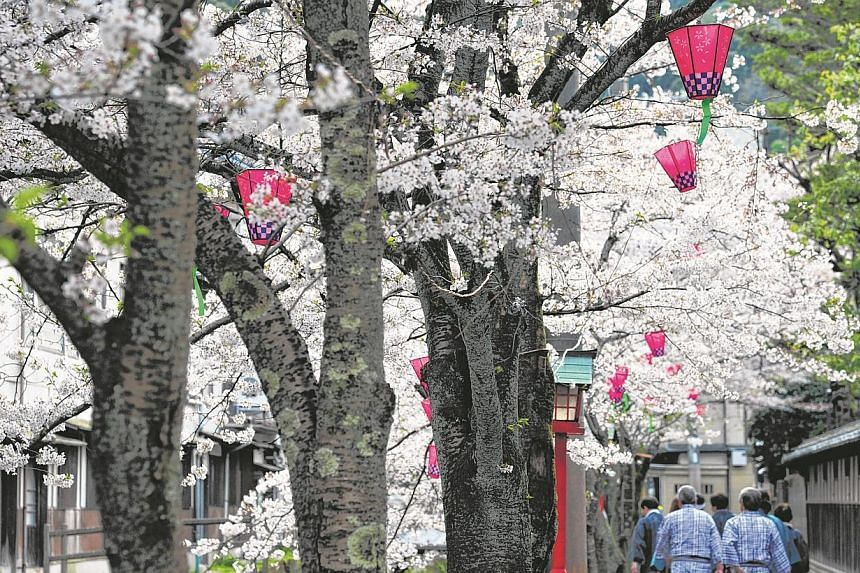 Locals clad in their yutakas and clogs heading for a bath along a lane festooned with white sakura trees in the old onsen town of Kinosaki.-- ST PHOTO: DESMOND FOO