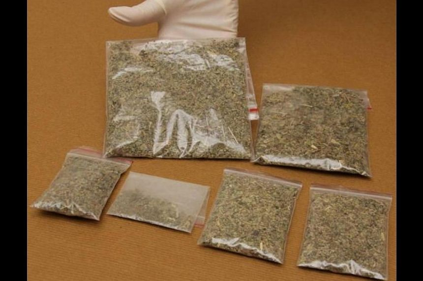 """Synthetic cannabis, or """"K2"""", seized by CNB officers in an operation conducted on Friday, May 2, 2014. -- PHOTO: CNB"""