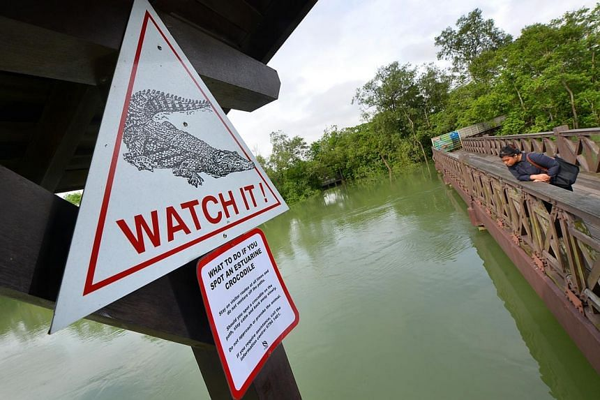 A sign at the Sungei Buloh Wetland Reserve telling visitors what to do if they spot a saltwater crocodile. The death of a saltwater crocodile, nicknamed Barney by anglers, puts the spotlight on these creatures that reside in Singapore's parks and res