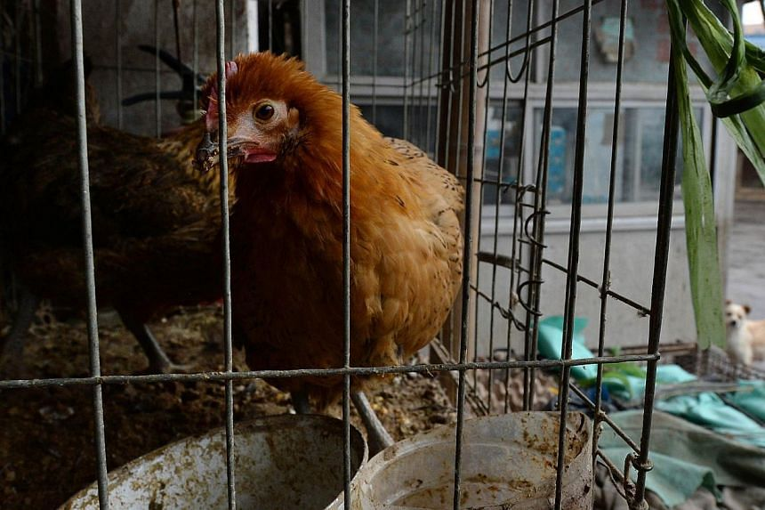 Chickens at a poultry market that has been closed due in Hangzhou, Zhejiang Province on Feb 17, 2014. A man from the south-western Chinese province of Sichuan has died after being infected with the H5N6 virus, state news agency Xinhua reported on Tue