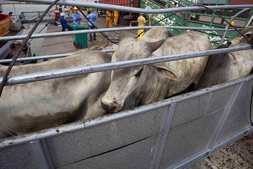 Cattle walk up a ramp into a cargo ship for export, at Vila do Conde port in Barcarena, Para state, near the mouth of the Amazon river, on Oct 9, 2013. -- FILE PHOTO: REUTERS