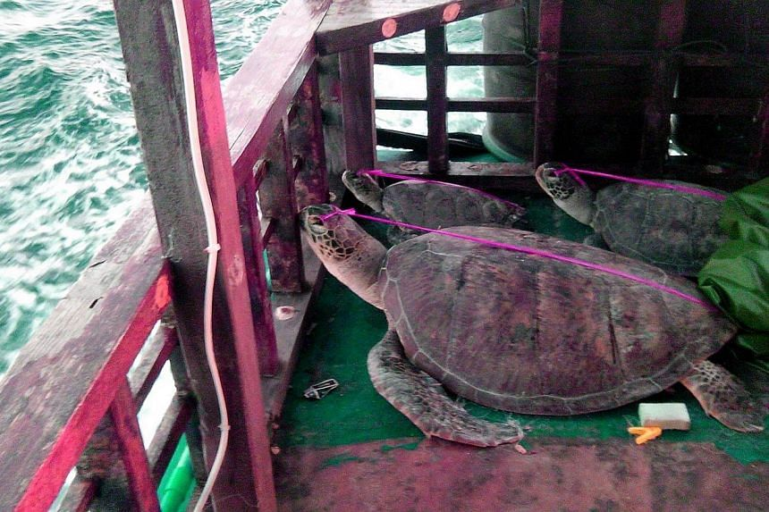 An undated handout photo released by Philippine National Police Maritime Palawan shows dead sea turtles lying on the deck of a Chinese-flagged fishing boat as it was towed by Philippine police to the town of Taytay on the western Philippine island of