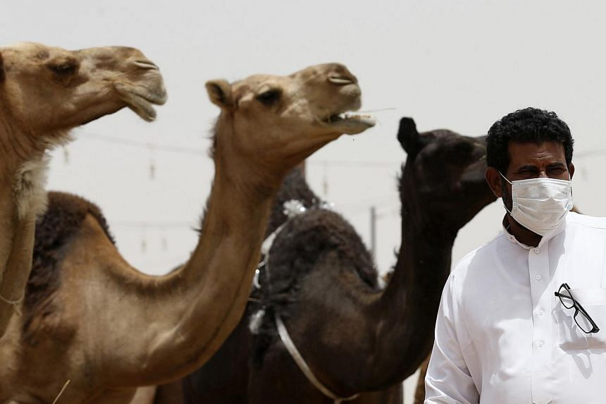 A man wearing a mask looks on as he stands in front of camels at a camel market in the village of al-Thamama near Riyadh May 11, 2014. -- FILE PHOTO: REUTERS