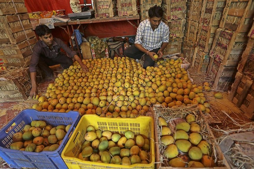 An Indian worker picks Alphonso mangoes to sell at a fruit market in Mumbai, India. Mango is regarded as the national fruit of India, Pakistan, Bangladesh and the Philippines. India is one of the leading producers of tropical and subtropical fruits i