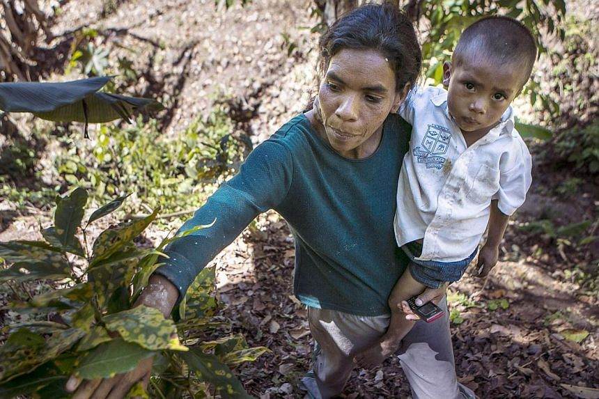 This Feb 26, 2014 file photo shows Nicaraguan coffee grower Gloria Balladares, 43, showing a rust blighted coffee plant at a plantation near Somoto, 200km from Managua. The US government announced on May 19, 2014 a new US$5 million (S$6.3 million) ef