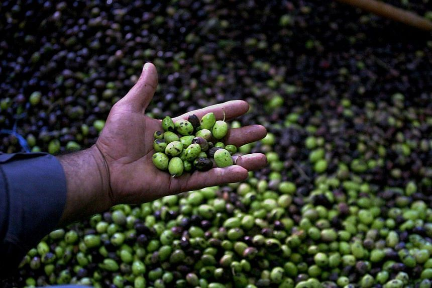 Fresh green olives as they are sorted and cleaned at an olive press in the village of Qabatiya, near the West Bank city of Jenin on Oct 12, 2010. Eating unsaturated fats, like those in olive oil, along with leafy greens and other vegetables creates a