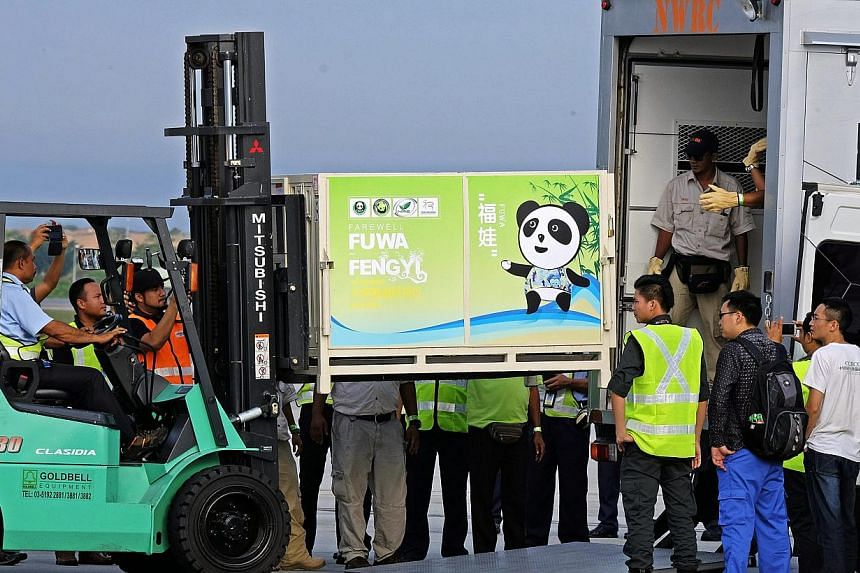 An airport personnel lifts a cage housing one of China's two pandas, eight-year-old Fu Wa (male), into a vehicle to be transported to the National Zoo upon the pandas' arrival at the Kuala Lumpur International Airport, in Sepang, outside Kuala Lumpur