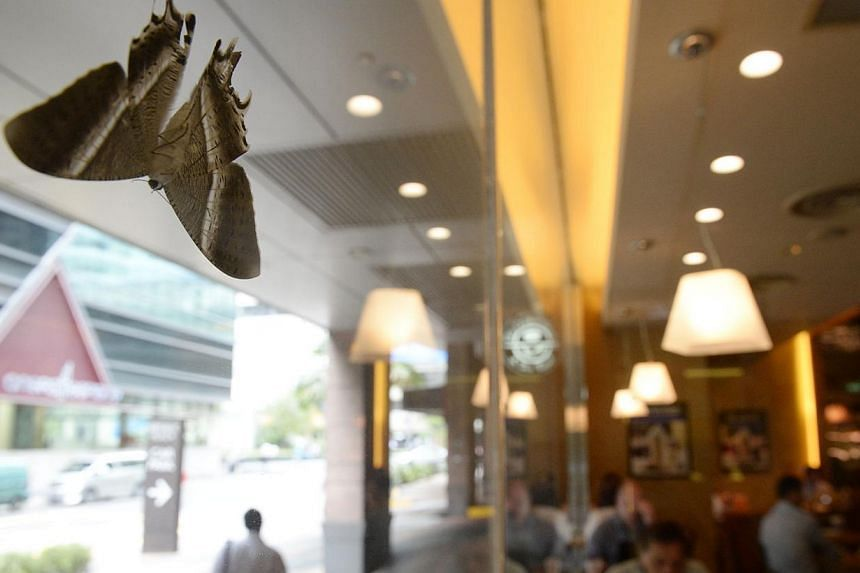 The large moths have been spotted across Singapore, including on this window at Republic Plaza yesterday.