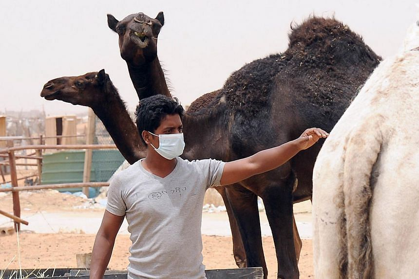An Indian worker wears a mouth and nose mask next to camels as he works at his Saudi employer's farm on May 12, 2014 outside Riyadh. _ PHOTO: AFP