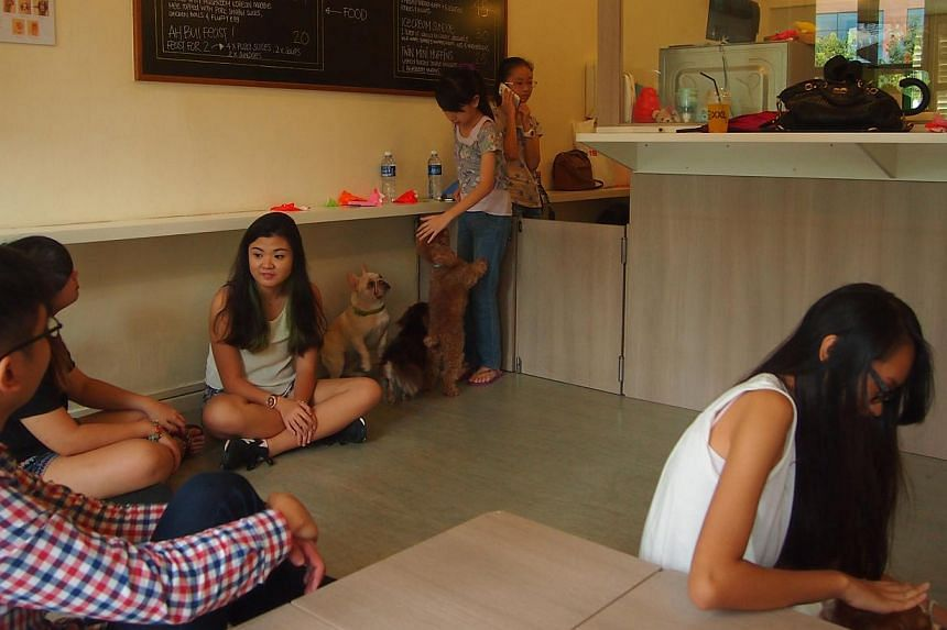 At Neko No Niwa (right) and We Are The Furballs (below), customers pay an entry fee to play with the cats and dogs.