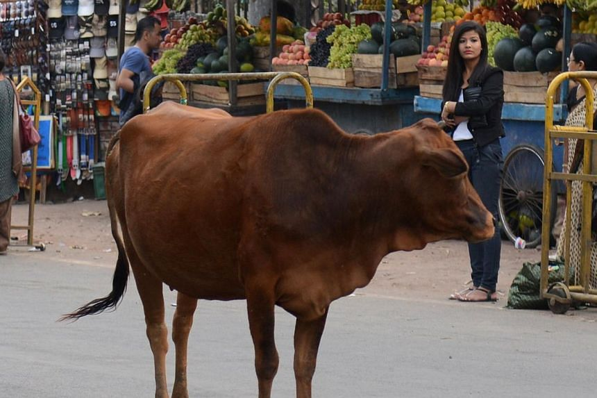 Venerated as cows are in India, many are still left to forage for scraps on the streets so their owners can save on fodder. They often end up ingesting plastic bags to assuage their hunger.