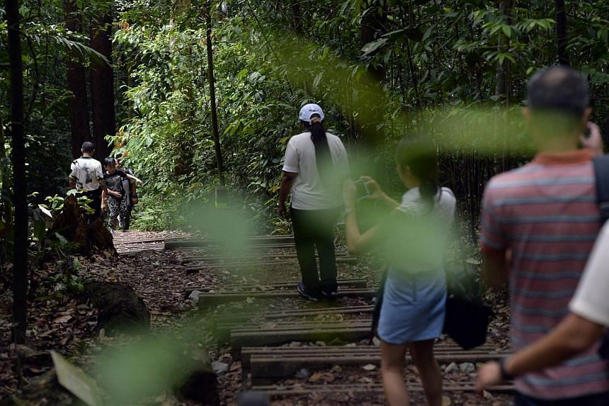 The National Parks Board (NParks) will be unveiling plans to enhance visitor safety and experience at Bukit Timah Nature Reserve. -- ST PHOTO: DESMOND FOO