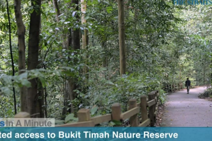 In today's The Straits Times News In A Minute video, we look at how the Bukit Timah Nature Reserve will be closed for six months from September, for repair works on its trails, slopes and park amenities, among other issues. -- PHOTO: SCREEGRAB FROM V