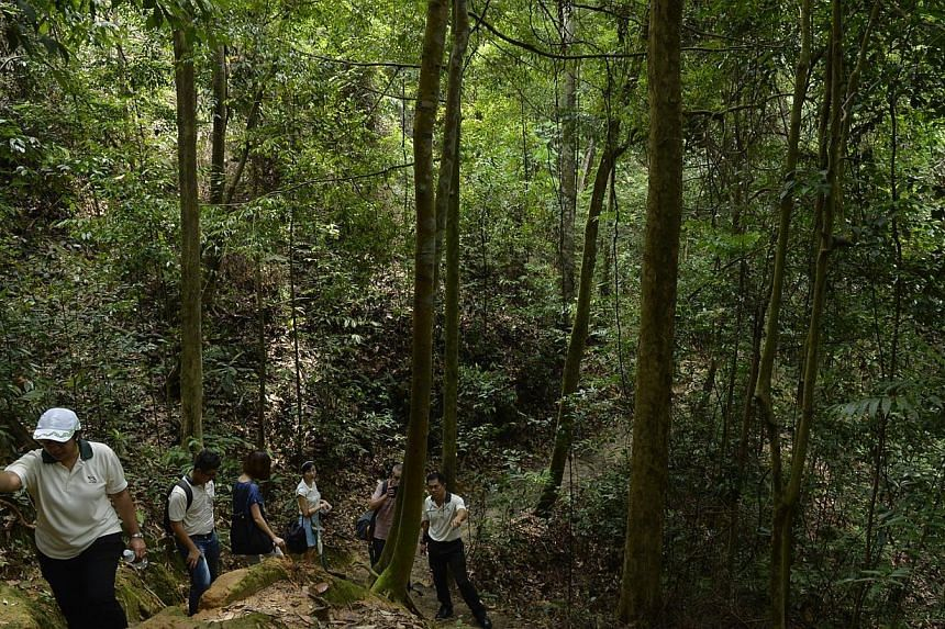 An eroded section of a trail along Bukit Timah Nature Reserve which will be undergoing renovation.-- ST PHOTO: DESMOND FOO