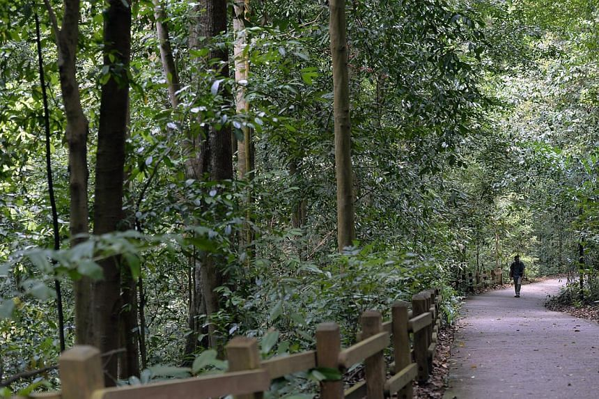 A solitary visitor walks up Bukit Timah hill yesterday morning. -- ST PHOTO:DESMOND FOO
