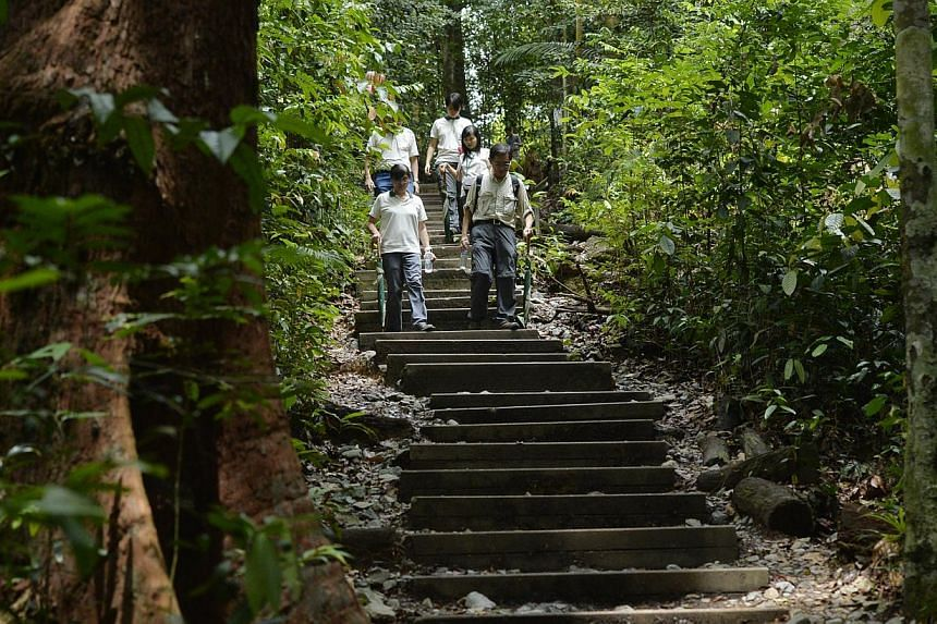 The National Parks Board (NParks) will be unveiling plans to enhance visitor safety and experience at Bukit Timah Nature Reserve.-- ST PHOTO:DESMOND FOO