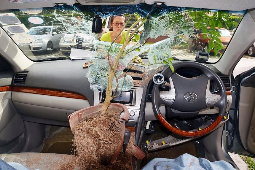 It is not clear if the potted plant, which damaged the car's dashboard and gear box, had fallen or was thrown by someone. The case has been classified as a rash act and police investigations are ongoing.