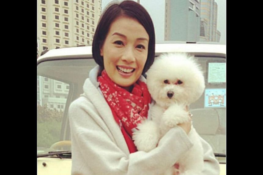 Actress Elena Kong (above, with her pet poodle Teddy Boy), who appears in TVB drama The Ultimate Addiction with Kate Tsui. -- PHOTO: WEIBO