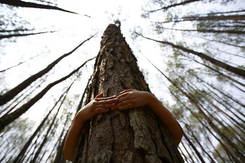 A boy hugs a tree as he prepares to take part in an attempt to break the Guinness World Record for the most number of people hugging trees for two minutes in Kathmandu June 5, 2014. According to the event organiser, 2,001 people took part in the even
