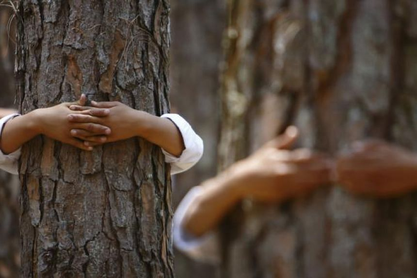 Hands hugging trees are pictured as participants take part in an attempt to break the Guinness World Record for the most number of people hugging trees for two minutes in Kathmandu on June 5, 2014. -- PHOTO: REUTERS