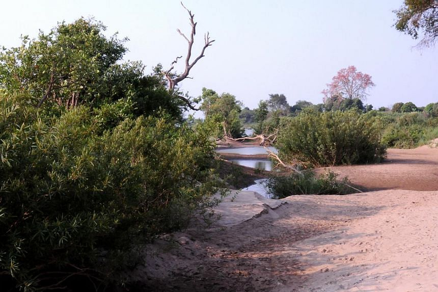 The trees in the flooded forest are all bent in the same direction and there are many sandbanks that make good picnic spots (above). -- PHOTO: NIRMAL GHOSH