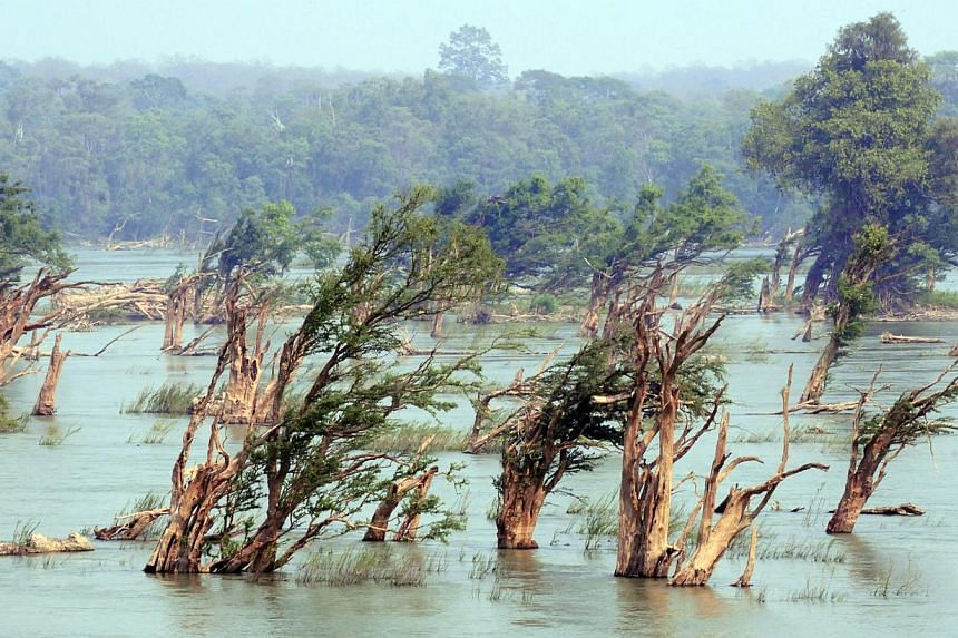 The trees in the flooded forest are all bent in the same direction (above) and there are many sandbanks that make good picnic spots. -- PHOTO: NIRMAL GHOSH