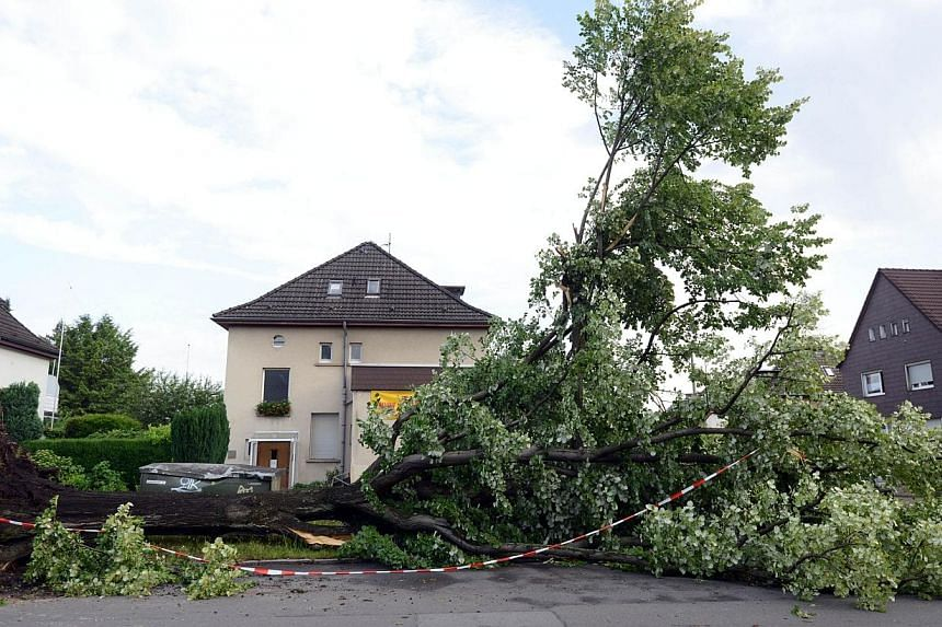 An uprooted tree lies a street on June 10, 2014 in Gelsenkirchen, Germany. -- PHOTO: AFP
