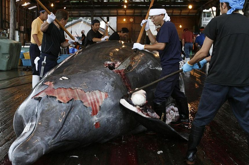 Workers butcher a Baird's beaked whale at Wada port in Minamiboso, southeast of Tokyo on June 28, 2008. -- PHOTO: REUTERS