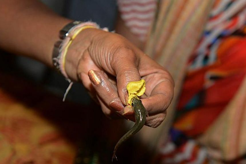 An Indian member of the Bathini Goud family holds a live murrel fish and medicine before administering 'fish medicine' to a patient at the exhibition grounds in Hyderabad on June 8, 2014. -- PHOTO: AFP