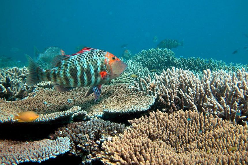 The Great Barrier Reef is perhaps one of Australia's best-known natural wonders, but it is considered to be in 'poor' health. -- PHOTO: OVE HOEGH-GUILDBERG