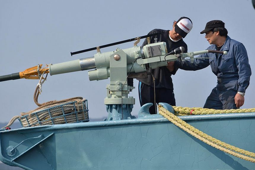 This file picture taken on April 26, 2014 shows crew members of a whaling ship checking a whaling gun or harpoon before departure at Ayukawa port in Ishinomaki City, northern Japan. Japan has slaughtered 30 minke whales off its north-east coast, in t