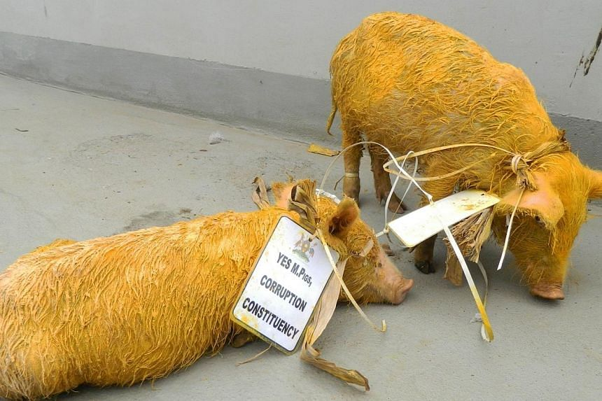 """Two painted piglets are outside the Uganda parliament building on June 17, 2014 in Kampala.The police in Uganda said on Saturday, June 21, 2014, that they were testing two piglets for """"terrorism-related material"""" after they were sneaked into th"""