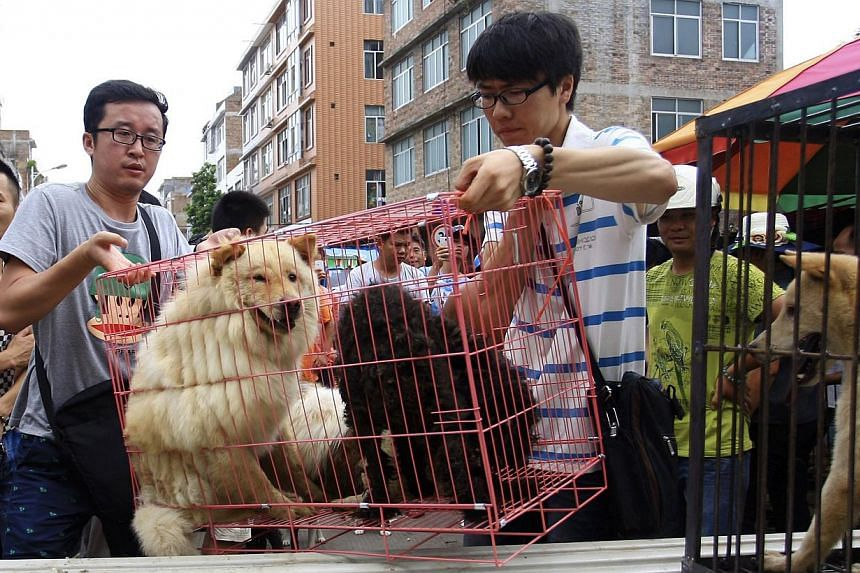 Animal activists loading a cage holding dogs that they just bought from vendors to stop them from being eaten ahead of the annual dog meat festival in Yulin, Guangxi Zhuang Autonomous Region, on June 20, 2014. The festival, scheduled on June 21 as in