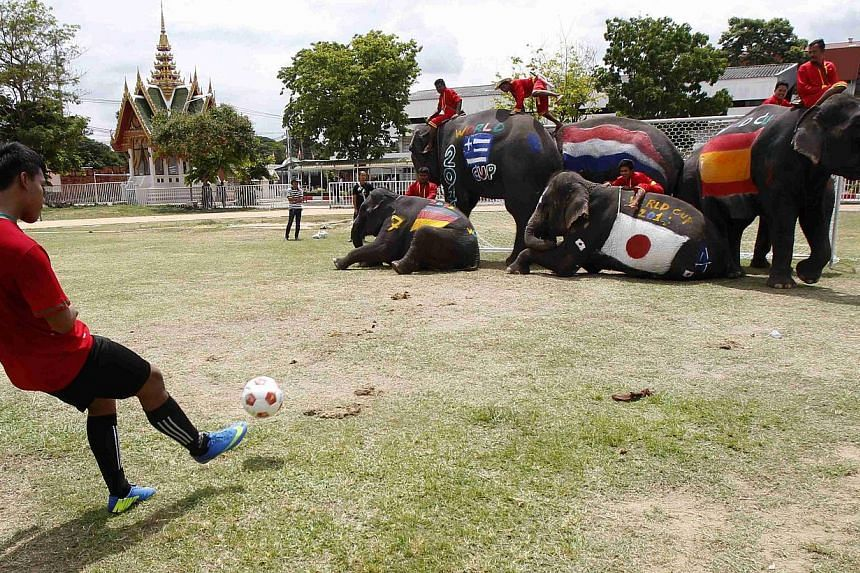 Elephants play soccer with Thai students at a school in Thailand's Ayutthaya province on June 9, 2014. Thailand's military leaders are cracking down on illegal gambling, which is forecast to soar during the World Cup, as part of a campaign to cl