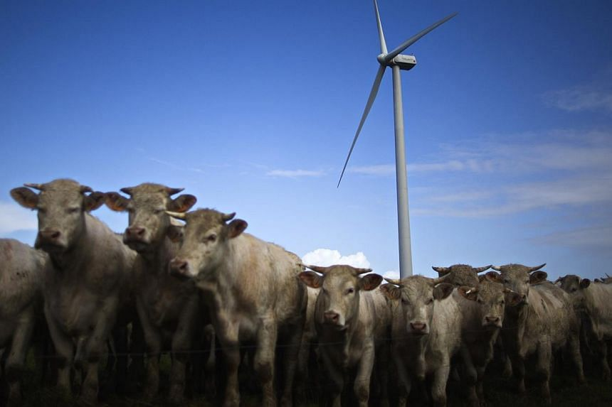 Cattle gather in a field near an ECO 110 wind turbine manufactured by Alstom in the Landes de Couesme wind farm near La Gacilly, western France, on April 26, 2014. If Europe adopted a style of farming that abstains from plowing after a harvest,