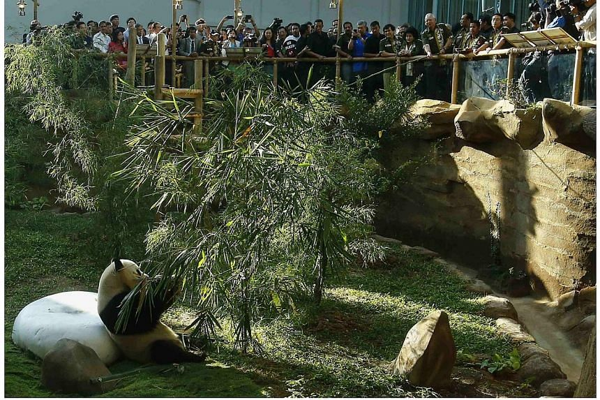 Malaysia's Prime Minister Najib Razak and his wife Rosmah Mansor look at Xing Xing, a male panda, during the opening ceremony of Panda Complex at National Zoo in Kuala Lumpur on June 25, 2014. -- PHOTO: REUTERS