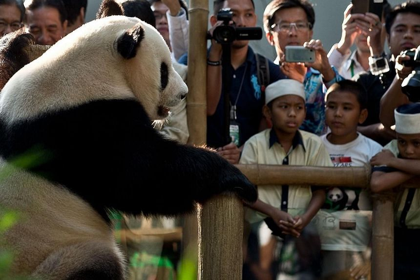 Children and other spectators watch Xing Xing(left), one of two giant pandas on loan from China, inside the Giant Panda Complex at the National Zoo in Kuala Lumpur on June 25, 2014. -- PHOTO: AFP